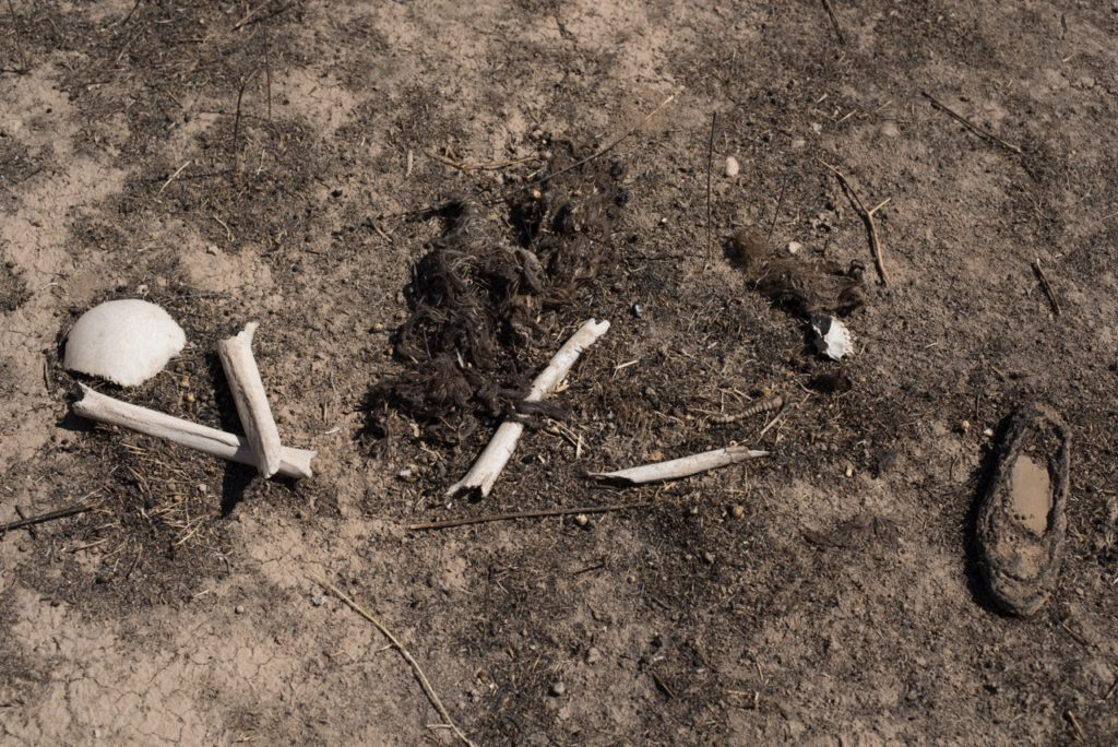 Bones and hair of women and children killed by ISIS