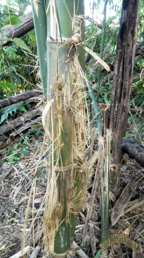 Bamboo destroyed by the impact of a mortar.