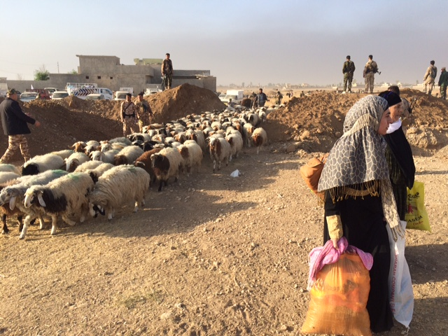 Shepherds and sheep cross the front-lines on the way to freedom. Photo: FBR.