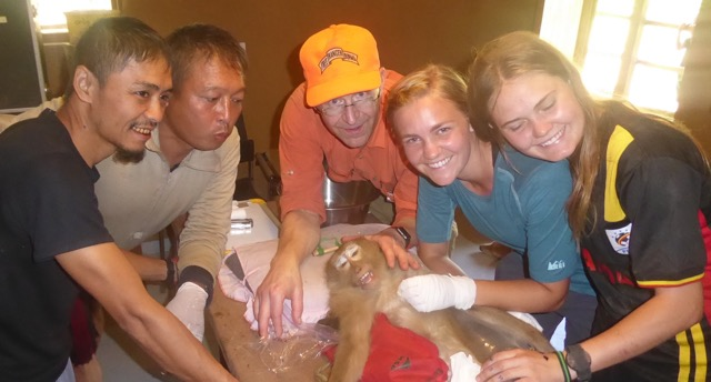 Monkey dentistry team and successful operation for Kid