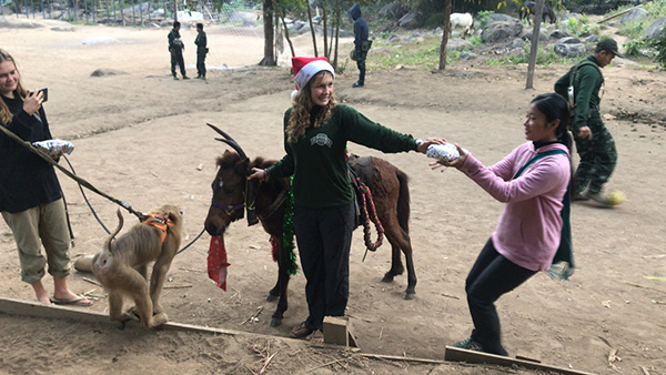 Christmas morning with Santa and a Burma horse/ Rudaw (Kurdish) the reindeer.