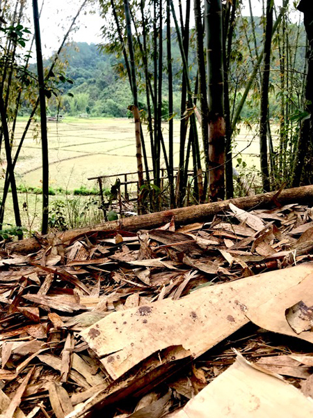 Saw O Moo's blood on leaves where he was murdered by the Burma Army on April 5th. Burma Army troops are on the hill behind the bamboo.