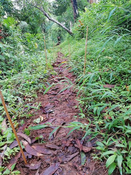 Bamboo Canes left by the KIA marking landmines yet to be cleared on the trail between Gauri Bum and Mam Htu Bum.