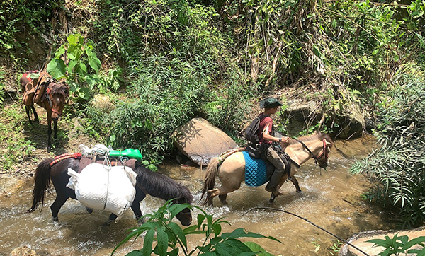 Peter leads some of the horse and mule team through a creek in Karen State.